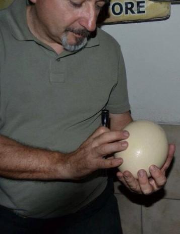 Speratura uovo di struzzo il Cascinetto