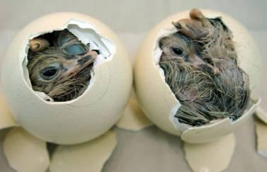 nascita struzzini