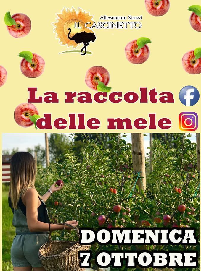 evento il cascinetto raccolta delle mele