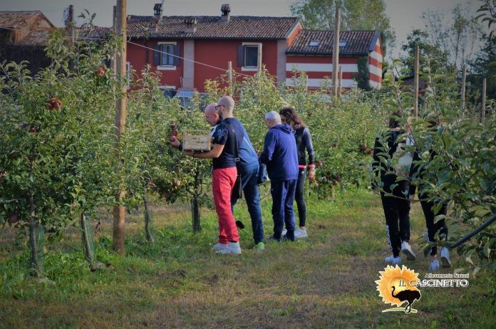 evento il cascinetto mela