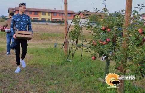 evento il cascinetto raccolta delle mele gabriele
