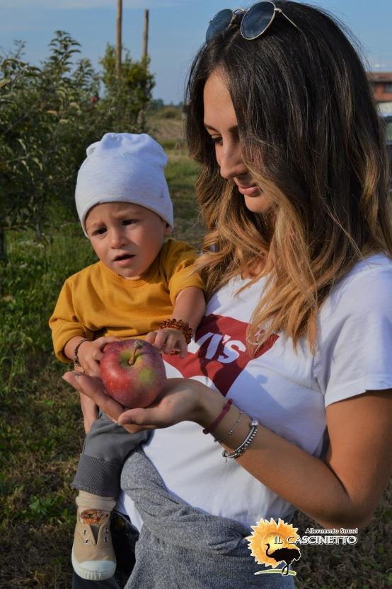 evento il struzzi cascinetto raccolta mele
